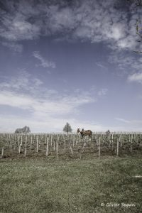Burgus_cheval_de_trait-0670_rrfa6f
