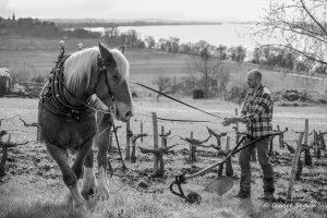 Burgus_cheval_de_trait-0773_tjjlyp