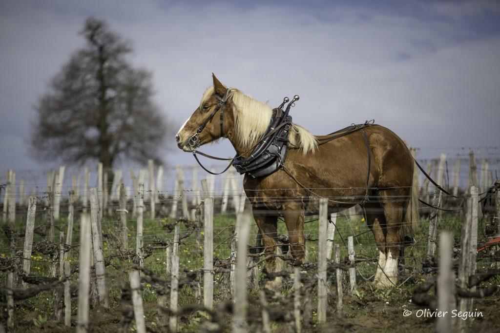 Burgus_cheval_de_trait-0788_ezsdnp