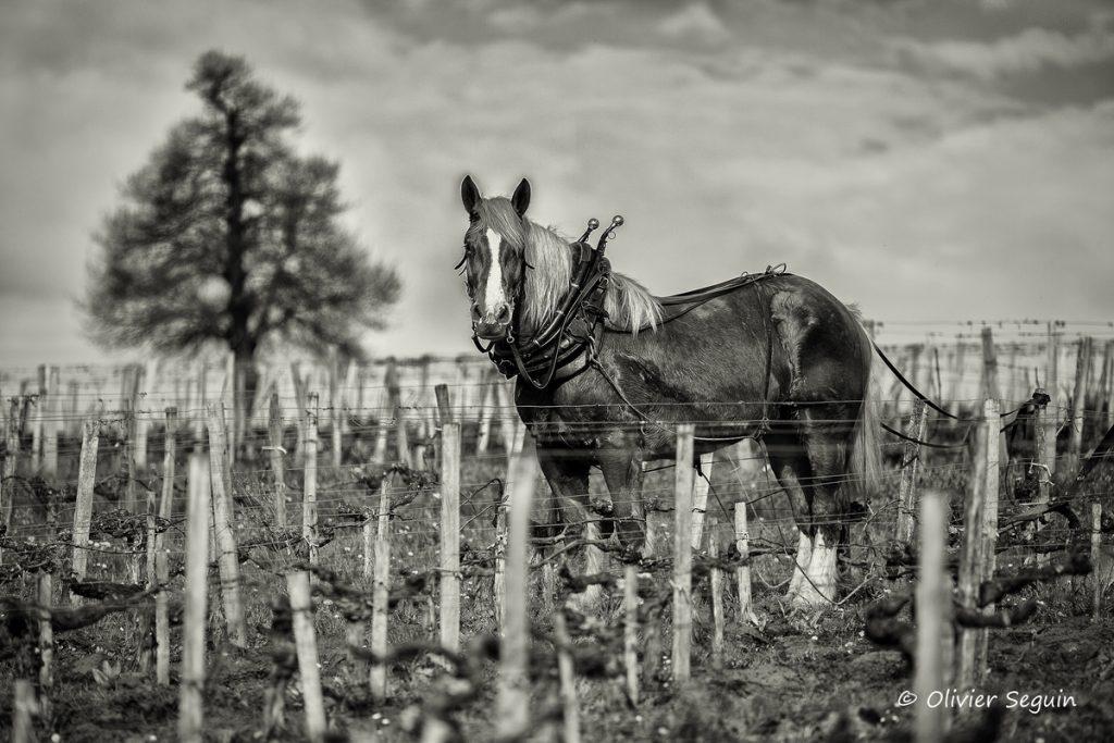 Burgus_cheval_de_trait-_yk268h