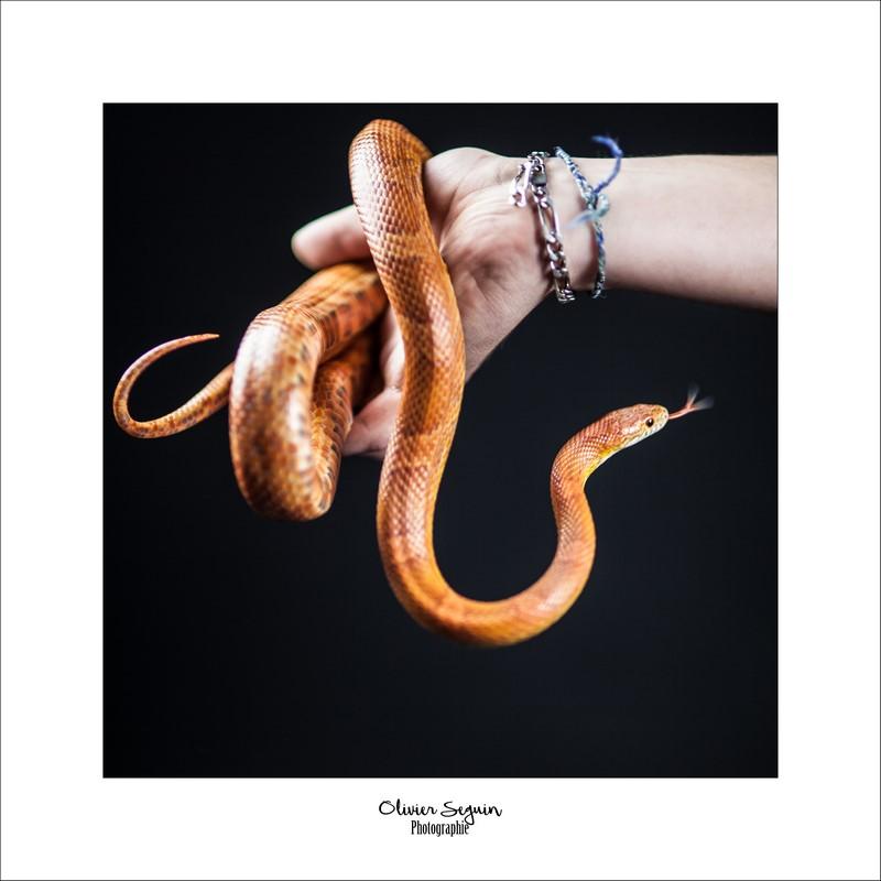 serpent Jacques